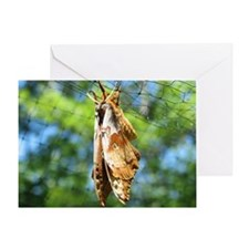 Big Moth Greeting Card