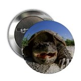 Snapping Turtle Button