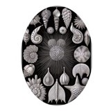 Haeckel Sealife Oval Ornament