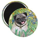 Irises / Pug Magnet
