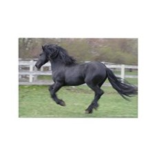 Unique Friesian Rectangle Magnet (10 pack)