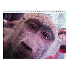 Funny Primates Wall Calendar