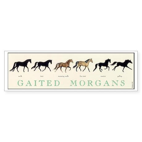 Gaited Morgans bumper sticker for car, truck or trailer