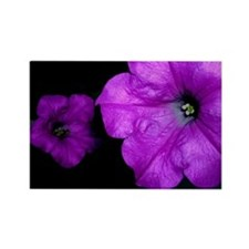 Purple Petunias Rectangle Magnet