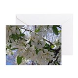 Apple Blossom Greeting Cards (Pk of 10)
