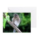 Fledgling Greeting Cards (Pk of 10)