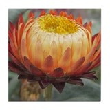 Strawflower Art Tile