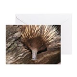 Australian Echidna Greeting Cards (Pk of 10)