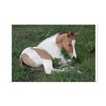 Sleeping foal Mini Poster Print