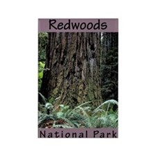 Redwoods National Park (Vertical) Rectangle Magnet
