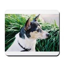 Observant Rat Terrier Mousepad