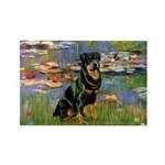 Lilies2/Rottweiler Rectangle Magnet (10 pack)