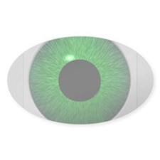 """You're Being Watched"" oval Decal"