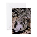 Wart hog Greeting Cards (Pk of 10)
