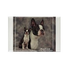 Boston Terrier-1 Rectangle Magnet