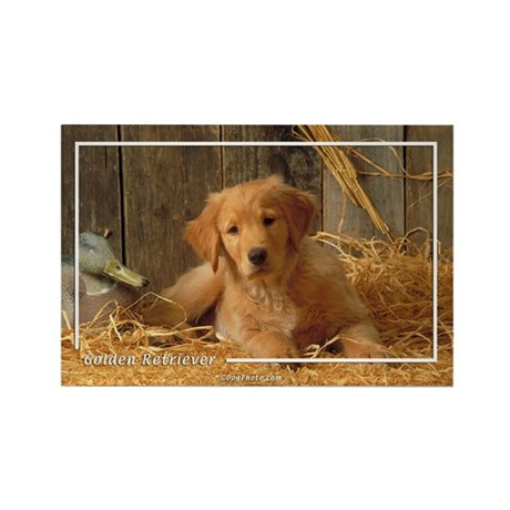 Golden Retriever-6 Rectangle Magnet (10 pack)