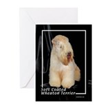 soft coated wheaton terrier Greeting Cards (Pk of