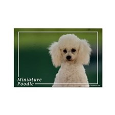 Miniature Poodle-9 Rectangle Magnet