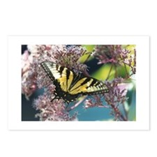 Postcards (Package of 8)- Eastern Swallowtail