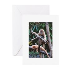 Greeting Cards (Pk of 10) - Primates