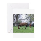 Equine foals Greeting Cards (20 Pack)