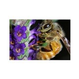 Honey Bee Rectangle Magnet