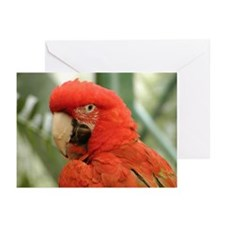 Unique Avain Greeting Cards (Pk of 10)