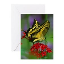 Cute Insect Greeting Cards (Pk of 10)