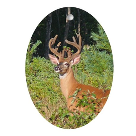 12 Point Buck Oval Ornament