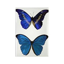 Blue Morphos Rectangle Magnet