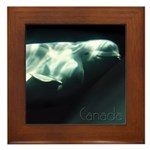Canada Souvenir Beluga Whale Framed Tile Art