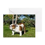 Honor Bulldog Greeting Cards (Pk of 10)