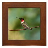Male Ruby-throated Hummingbird Framed Tile