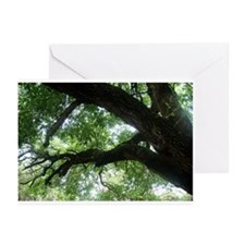 Beloved Oak Greeting Cards (Pk of 20)