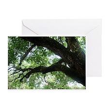Beloved Oak Greeting Card