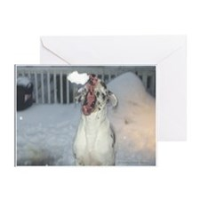Snowball Catch Harlequin Great Dane Cards (10p)