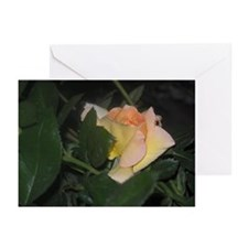 Yellow Rose Greeting Cards (Pk of 20)