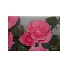 Pink rose Rectangle Magnet (10 pack)