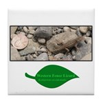 Baby Fence Lizard Tile Coaster