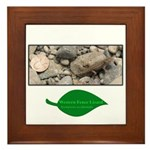 Baby Fence Lizard Framed Tile