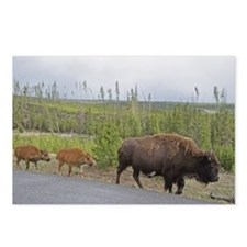 Roadside Twins Postcards (Package of 8)