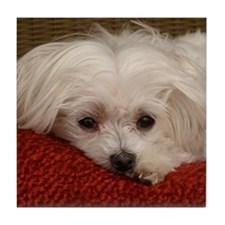 Cute Maltese Tile Coaster