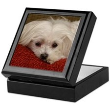 Cute Maltese Keepsake Box
