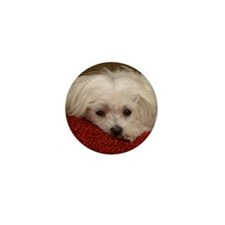 Cute Maltese Mini Button (100 pack)