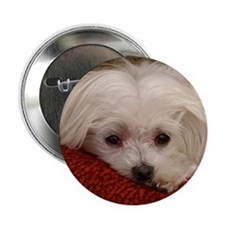 "Cute Maltese 2.25"" Button (10 pack)"
