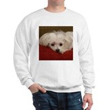 Cute Maltese Sweatshirt