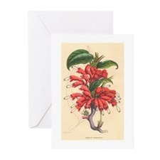 Antique Print-Red Flower Greeting Cards (Pk of 10)