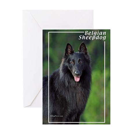 Belgian Sheepdog-1 Greeting Card