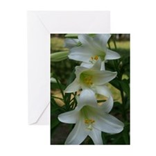 Easter Lily 3 Greeting Cards (Pk of 10)
