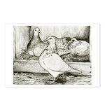 Texan Pioneer Pigeons Postcards (Package of 8)